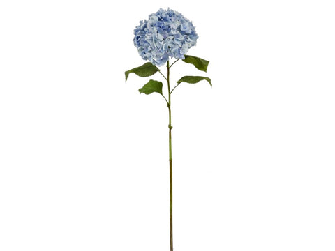 Long Light Blue Hydrangea Stem #19562400