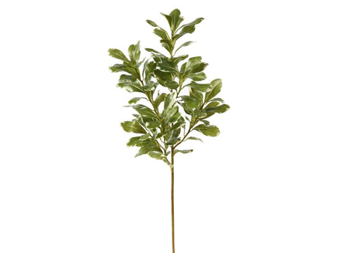 Large Pittosporum Spray #19566400