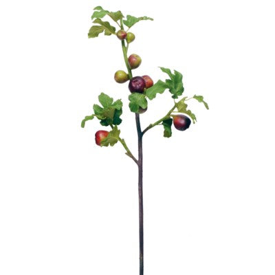Red Fig Branch #195980B00
