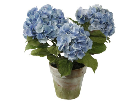 Three Blue Hydrangeas Potted #1P4064LB00