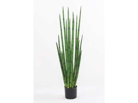 SNAKE GRASS POTTED 4'  #1PG2021.GR