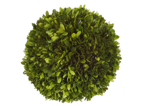 "10"" Boxwood Ball #1PG3128GR00"