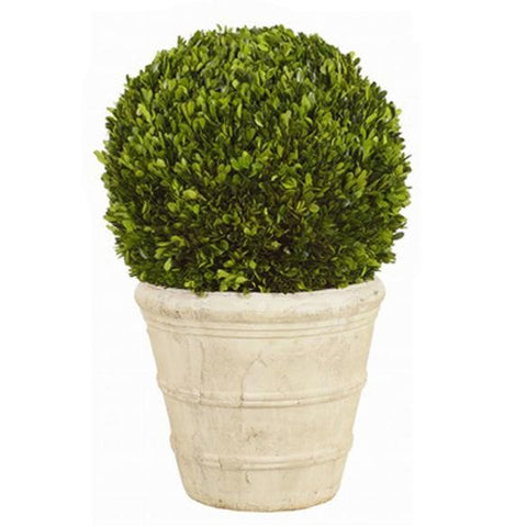 Boxwood Ball on Pot #1PG3142GR00