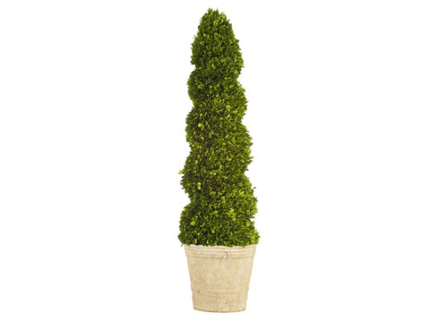 Spiral Boxwood Topiary #1PG3144GR00