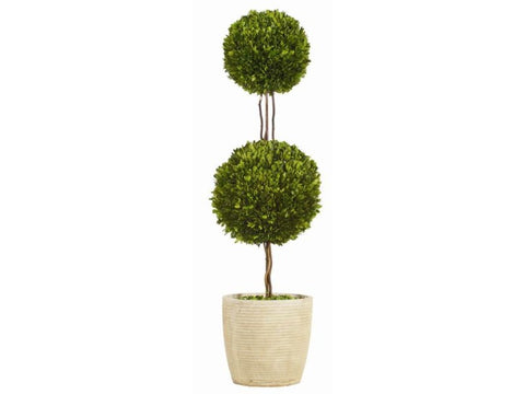 Double Boxwood Topiary #1PG3145GR00