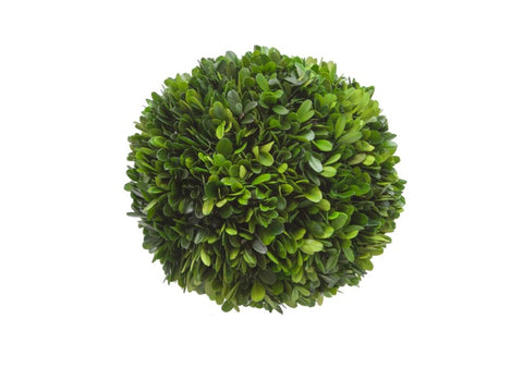 "8"" Boxwood Ball #1PG3163GR00"