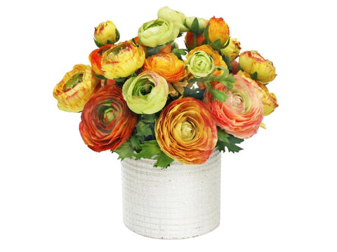 MIXED RANUNCULUS IN WHITE POT 12''  9476.YLOR00