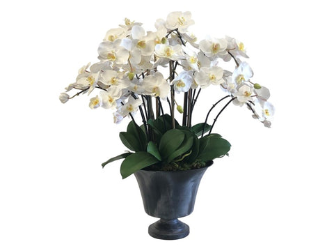 MINI PHALAENOPSIS ORCHID IN PLANTER  #9519.WH00