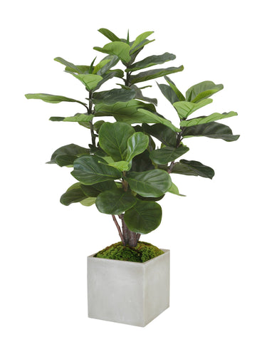 FIDDLE LEAF FIG TREE SMALL #1111.GR00
