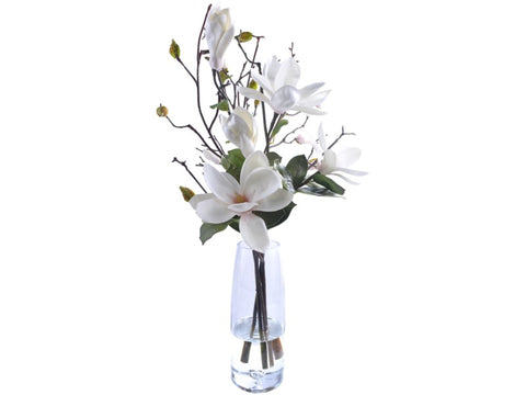 WP9920-CHOO TREE MAGNOLIA IN GLASS 29''