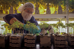After Next Big Crop Delivered a Top-Scoring Marijuana Business Application for Green Leaf Medical, We Helped Make Their Cannabis Cultivation Goals a Reality