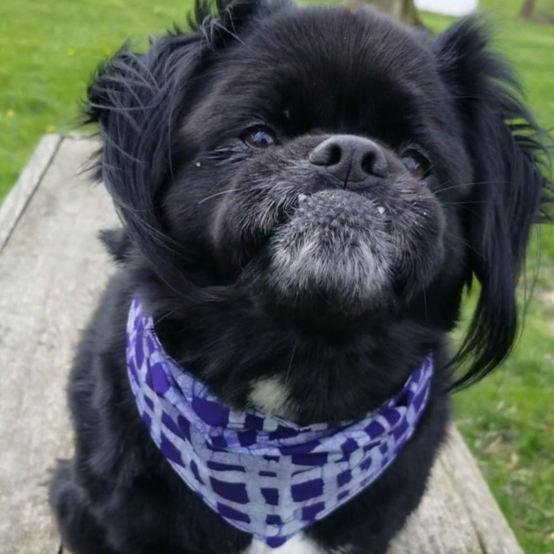 Pet Organic Bandana - Small