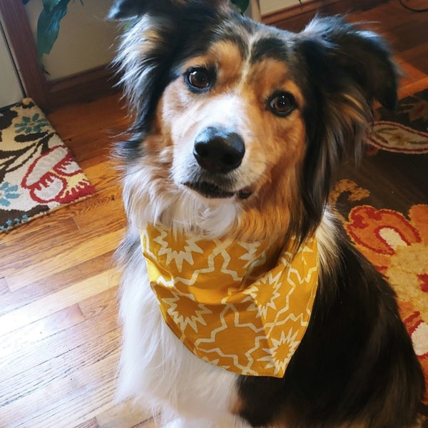 Pet Organic Bandana - Large