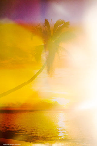 Sunset Palm by Greg Curtis