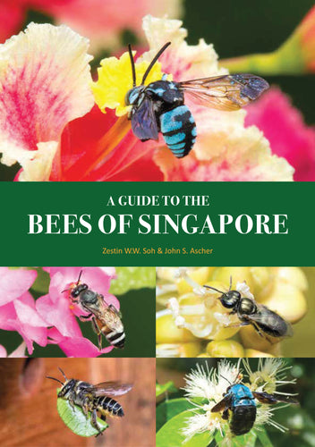 A Guide to the Bees of Singapore