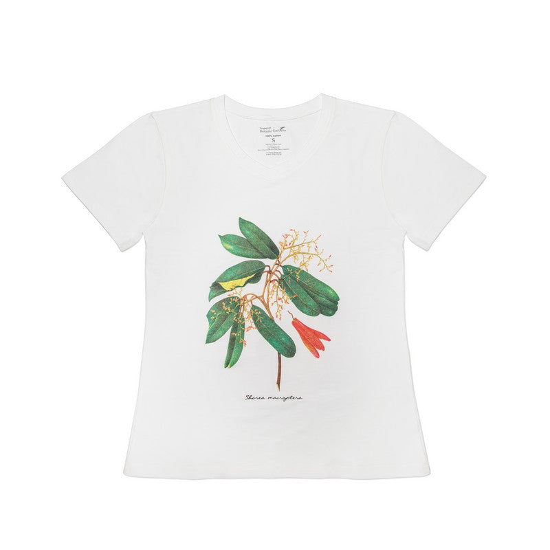 shorea-macroptera-white-womens