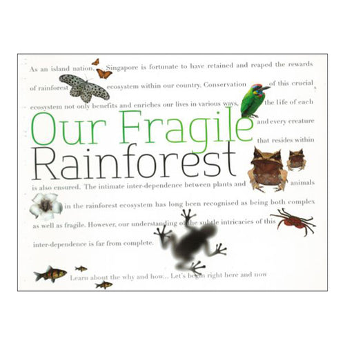our-fragile-rainforest