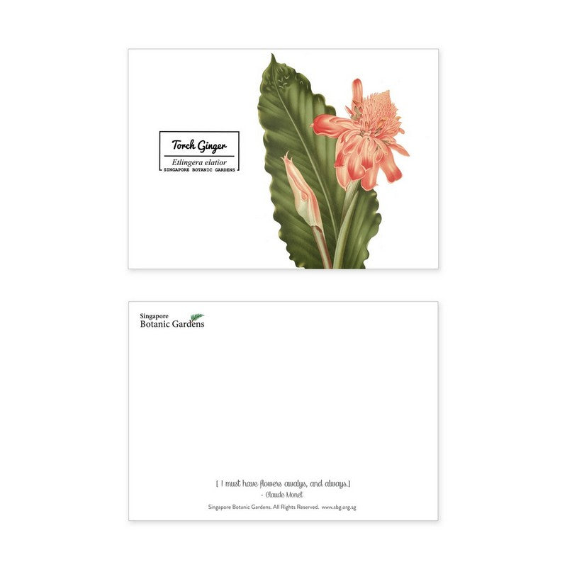 torch-ginger-postcard