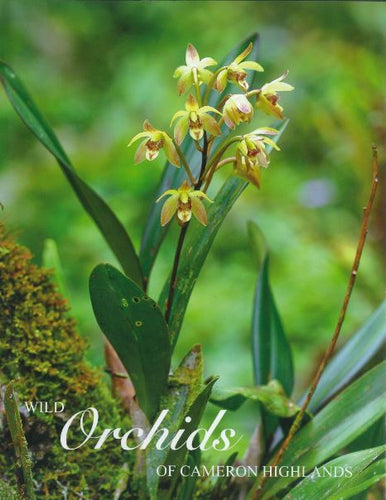 wild-orchids-of-cameron-highlands