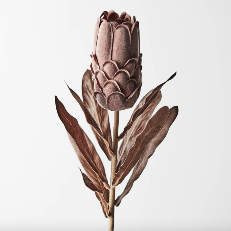 Protea Brown 69cml