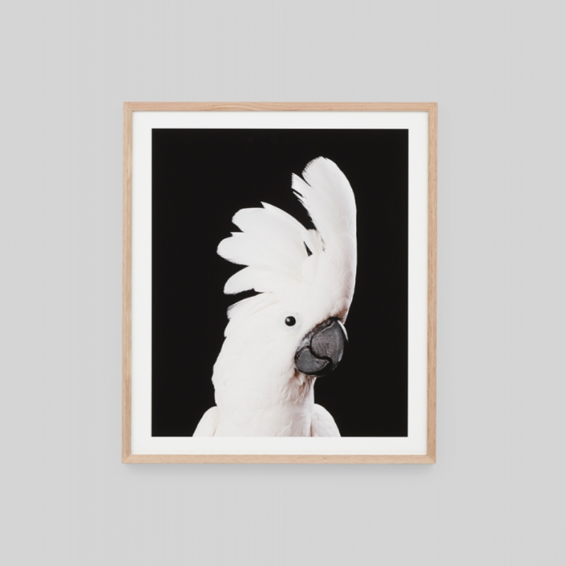 Crested Cockatoo 64x79