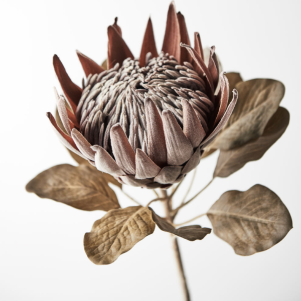 Protea King Brown 74cm