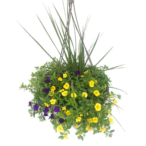 Mixed Sun Hanging Basket, Assorted