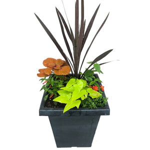 'Campfire' Mixed Planter