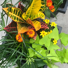Load image into Gallery viewer, Josh's Mixed Croton Sun Planter