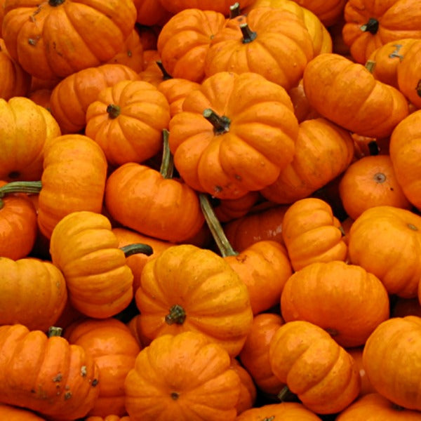 Pumpkin 'Jack-Be-Little'