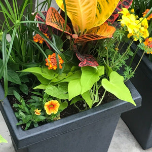 Josh's Mixed Croton Sun Planter