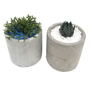 Succulents, Assorted, Cement Pots