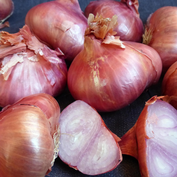 French Shallots Bulbs