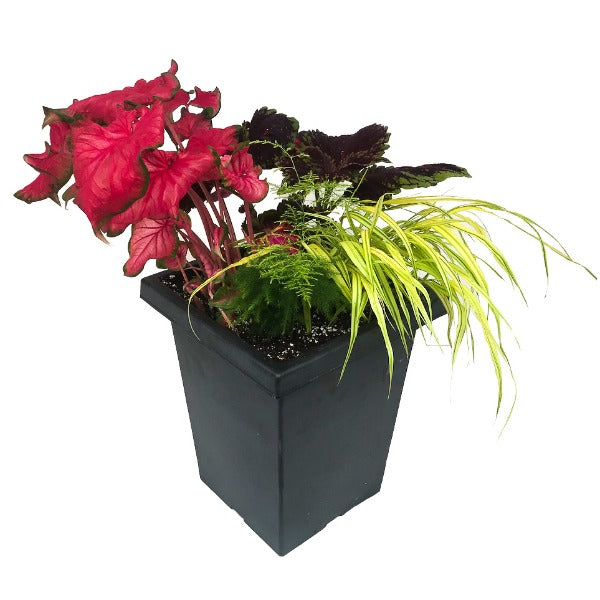 Donna's Caladium Shade Planter