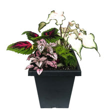 Load image into Gallery viewer, Meghan's Caladium Shade Planter, Mixed, Assorted