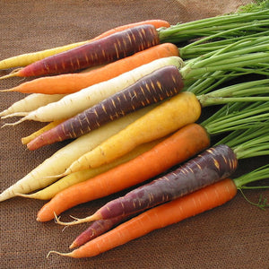 Carrot 'Harlequin'