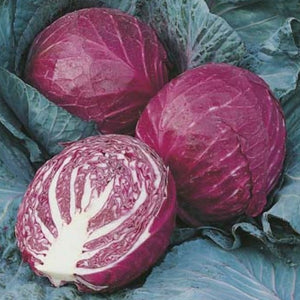 Cabbage 'Red Ruby Ball'