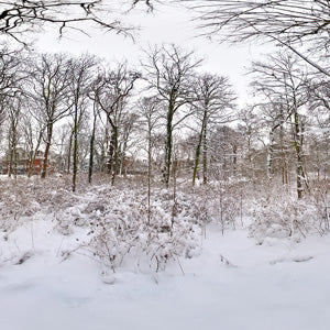 Dutch Free 360° HDRI – 012 | Winter Forest scene
