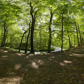 Dutch Free 360° HDRI – 015 | Forest scene