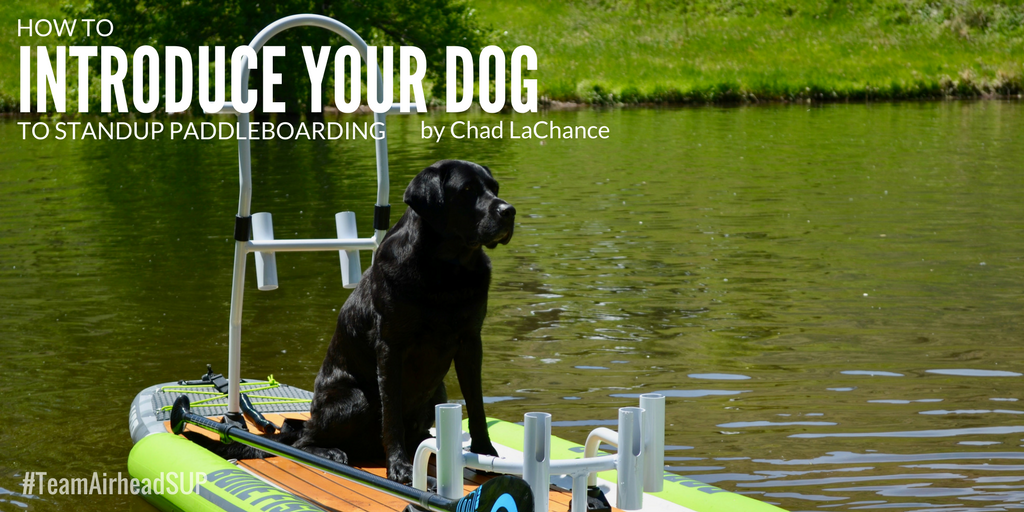 How to Introduce Your Dog to Stand Up Paddleboarding