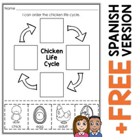 Chicken Life Cycle Activity