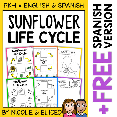 Sunflower Life Cycle Activities