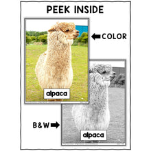 Load image into Gallery viewer, Alpaca Close Reading Passage Activities