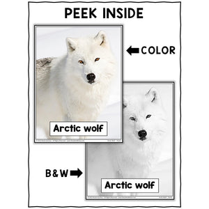 Arctic Wolf Close Reading Passage Activities