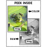 Frog Close Reading Passage Activities