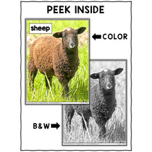 Load image into Gallery viewer, Sheep Close Reading Passage Activities