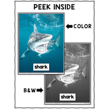Load image into Gallery viewer, Shark Close Reading Passage Activities