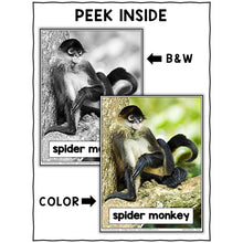 Load image into Gallery viewer, Spider Monkey Close Reading Passage Activities