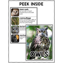 Load image into Gallery viewer, Owl Activities Nonfiction Unit