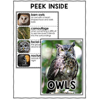 Owl Activities Nonfiction Unit
